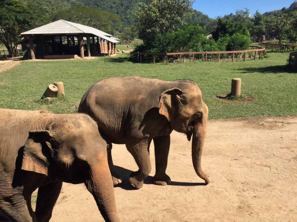 Luxe Vacations with Elephant Nature Park
