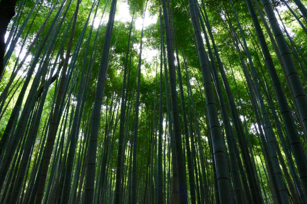 Harashiyama Bamboo Forest, Japan